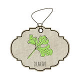 Handdrawn illustration from the collection of spices and herbs. The old label in retro style with colorful fragrant leaf cilantro. Royalty Free Stock Photos