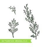 Handdrawn illustration - hälso- och naturuppsättning vektor illustrationer
