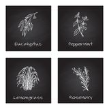 Handdrawn Illustration - Health and Nature Set. Collection of Herbs on Black Chalkboard. Labels for Essential Oils and Natural Supplements. Lemongrass Royalty Free Stock Image