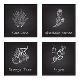 Handdrawn Illustration - Health and Nature Set. Collection of Herbs on Black Chalkboard. Labels for Essential Oils and Natural Supplements. Aloe Vera, Rhodiola Royalty Free Stock Photography