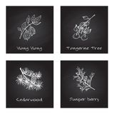 Handdrawn Illustration - Health and Nature Set. Collection of Herbs on Black Chalkboard. Labels for Essential Oils and Natural Supplements. Ylang Ylang Royalty Free Stock Photos