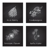 Handdrawn Illustration - Health and Nature Set. Collection of Herbs on Black Chalkboard. Labels for Essential Oils and Natural Supplements. Gotu Kola, Acai Stock Image