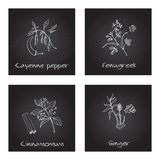 Handdrawn Illustration - Health and Nature Set. Collection of Herbs on Black Chalkboard. Natural Supplements. Cayenne pepper, Fenugreek, Cinnamomum, Ginger Stock Image