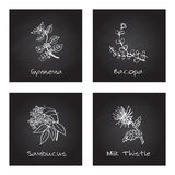 Handdrawn Illustration - Health and Nature Set. Collection of Herbs on Black Chalkboard. Natural Supplements. Gymnema, Bacopa, Sambucus, Milk Thistle Royalty Free Stock Photos