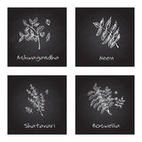 Handdrawn Illustration - Health and Nature Set. Collection of Herbs on Black Chalkboard. Natural Supplements. Neem, Boswellia, Shatavari, Ashwagandha Royalty Free Stock Photo