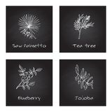 Handdrawn Illustration - Health and Nature Set. Collection of Herbs on Black Chalkboard. Natural Supplements. Saw palmetto, Tea tree, Blueberry, Jojoba Royalty Free Stock Photos