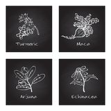 Handdrawn Illustration - Health and Nature Set. Collection of Herbs on Black Chalkboard. Natural Supplements. Turmeric, Maca, Arjuna, Echinacea Stock Images