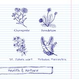 Handdrawn Illustration - Health and Nature Set Royalty Free Stock Photo