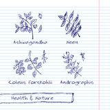 Handdrawn Illustration - Health and Nature Set Stock Photo