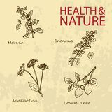 Handdrawn Illustration - Health and Nature Set Royalty Free Stock Photography