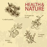Handdrawn Illustration - Health and Nature Set Stock Images