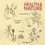 Handdrawn Illustration - Health and Nature Set. Natural Supplements. Cayenne pepper, Fenugreek, Cinnamomum, Ginger Stock Image