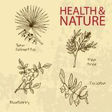 Handdrawn Illustration - Health and Nature Set Royalty Free Stock Image