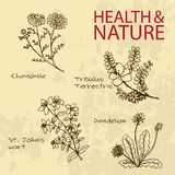 Handdrawn Illustration - Health and Nature Set. Natural Supplements. Collection of Medicine Herbs. Chamomile, Dandelion,  St John's wort, Tribulus Terrestris Stock Photo
