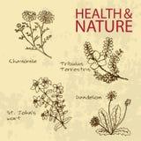 Handdrawn Illustration - Health and Nature Set Stock Photo