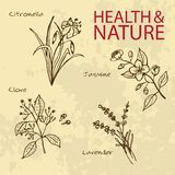Handdrawn Illustration - Health and Nature Set Stock Photos