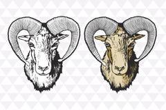 Handdrawn Illustration Mouflon-Vektors Lizenzfreies Stockfoto
