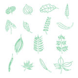 Handdrawn leaf elements in  Royalty Free Stock Photography