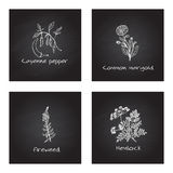 Handdrawn Medicinal Herbs - Health and Nature Set Stock Images