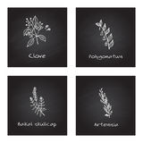 Handdrawn Medicinal Herbs - Health and Nature Set Royalty Free Stock Photo