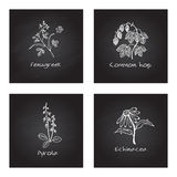 Handdrawn Medicinal Herbs - Health and Nature Set Stock Photos