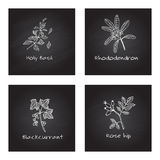 Handdrawn Medicinal Herbs - Health and Nature Set Royalty Free Stock Photography