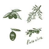 Handdrawn olivgröna beståndsdelar Arkivfoton