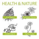 Handdrawn Set - Health and Nature. Collection of. Medicine Herbs. Labels for Essential Oils and Natural Supplements. Gotu Kola, Acai Berry, Codonopsis, Passion Royalty Free Stock Photo