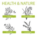 Handdrawn Set - Health and Nature. Collection of Stock Images