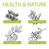 Handdrawn Set - Health and Nature. Collection of Stock Photo