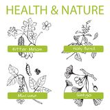 Handdrawn Set - Health and Nature. Collection of. Medicine Herbs.  Natural Supplements. Bitter melon, Holy Basil, Mucuna, Ginkgo Royalty Free Stock Image