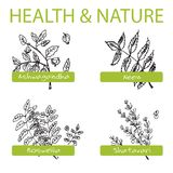 Handdrawn Set - Health and Nature. Collection of Royalty Free Stock Photos