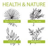 Handdrawn Set - Health and Nature. Collection of. Medicine Herbs. Natural Supplements. Saw palmetto, Tea tree, Blueberry, Jojoba Stock Photos