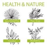 Handdrawn set - zdrowie i natura Kolekcja ilustracja wektor