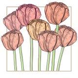 Handdrawn tulpenkaart Pastelkleur tedere kleuren, gevoelig kader Vector illustratie Royalty-vrije Stock Afbeelding
