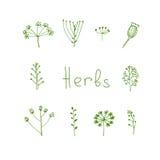 Handdrawn växt- beståndsdelar in Arkivfoto