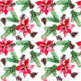 Handdrawn vintage Poinsettia flower with firtree cone and branch, watercolor Christmas seamless pattern isolated on white. Handdrawn vintage Poinsettia flower Stock Image