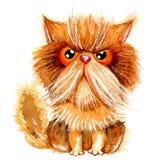 Handdrawn watercolor grumpy persian cat. Royalty Free Stock Photo