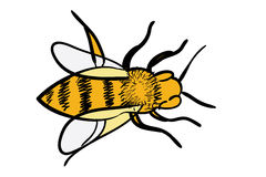Handdrawn yellow bee Royalty Free Stock Images