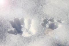 Handdruk en pootdruk in de witte sneeuw stock foto