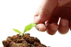 Handdruk met jonge plant Stock Foto's