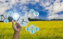 Handdrukknop om aan veiling, met pictogram van landbouwproductveilingmeester, met hemelachtergrond en organische gebieden deel te stock afbeelding