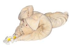 Handdukelefant royaltyfri bild