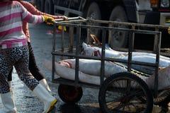 Handel för tonfiskfisk på Qui Nhon fiskport, Vietnam Fotografering för Bildbyråer