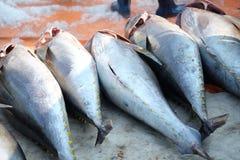 Handel för tonfiskfisk på Qui Nhon fiskport, Vietnam Arkivfoto