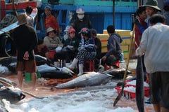 Handel för tonfiskfisk på Qui Nhon fiskport, Vietnam Royaltyfria Bilder