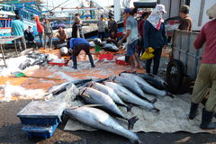 Handel för tonfiskfisk på Qui Nhon fiskport, Vietnam Royaltyfri Fotografi