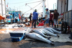 Handel för tonfiskfisk på Qui Nhon fiskport, Vietnam Arkivbilder