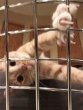 Handeln der schweren Zeit im Gefängnis Stockfotos