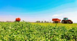 Handels-Pea Farming mit einem Mähdrescher lizenzfreies stockbild